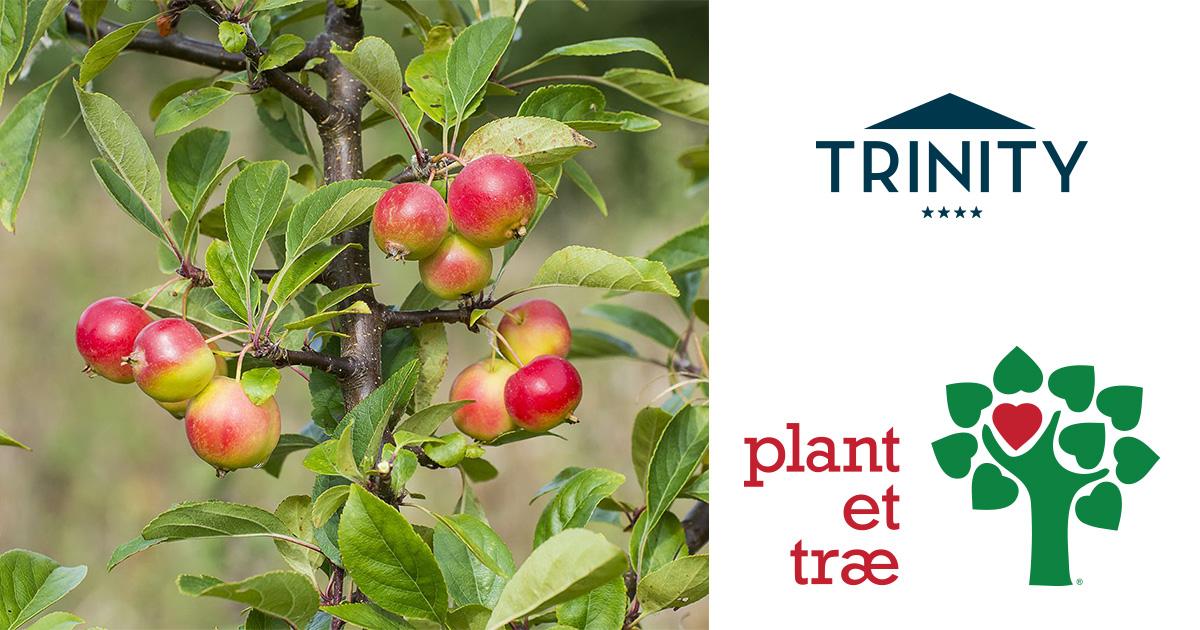 Trinity planter træer